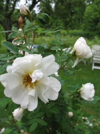 Trädgårdsvandring i Gamla Enskede och Enskededalen